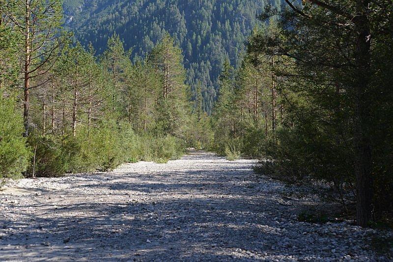 honig-im-kopf-duerrensee-a 7