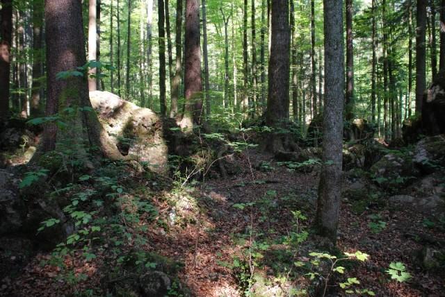 wfsilt_drehort_ruhpolding_märchenwald_21_C
